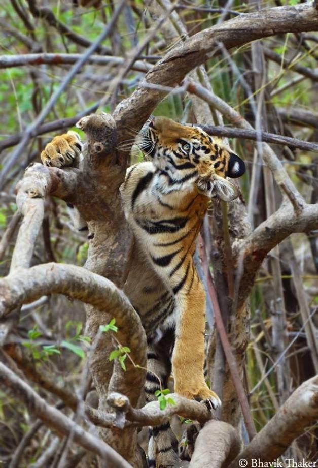 Bhavik Thaker Photography