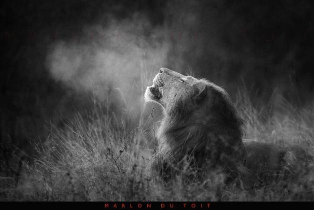 Marlon du Toit Photography