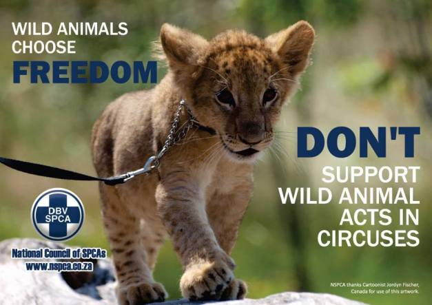 NSPCA - National Council of SPCA's
