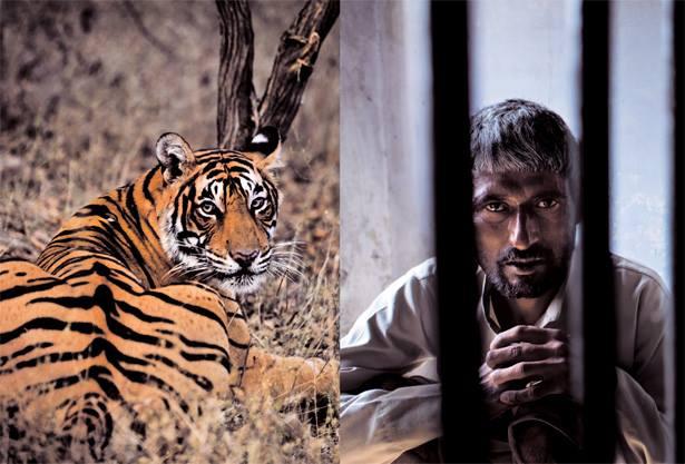 Tiger Protection Society