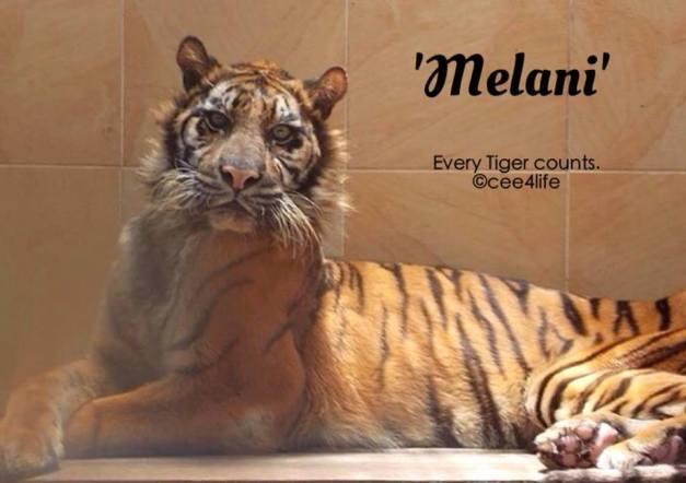 melani new