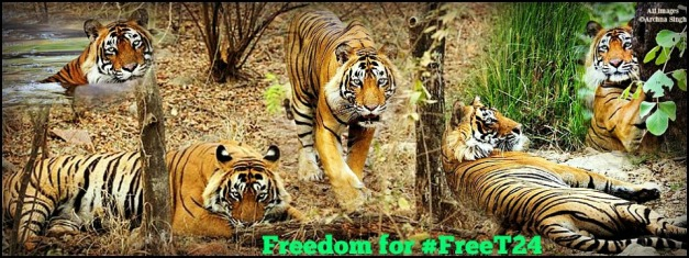Freedom for #FreeT242